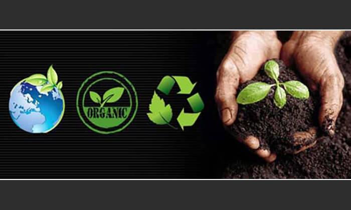 محصول ارگانیک (Organic)